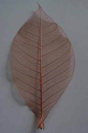 Plain Skelton Leaves - Brown