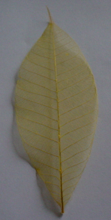 Plain Skelton Leaves - Yellow