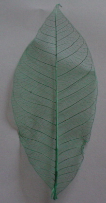 Plain Skelton Leaves - Green