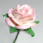 50 Large Open Roses - Pale Pink